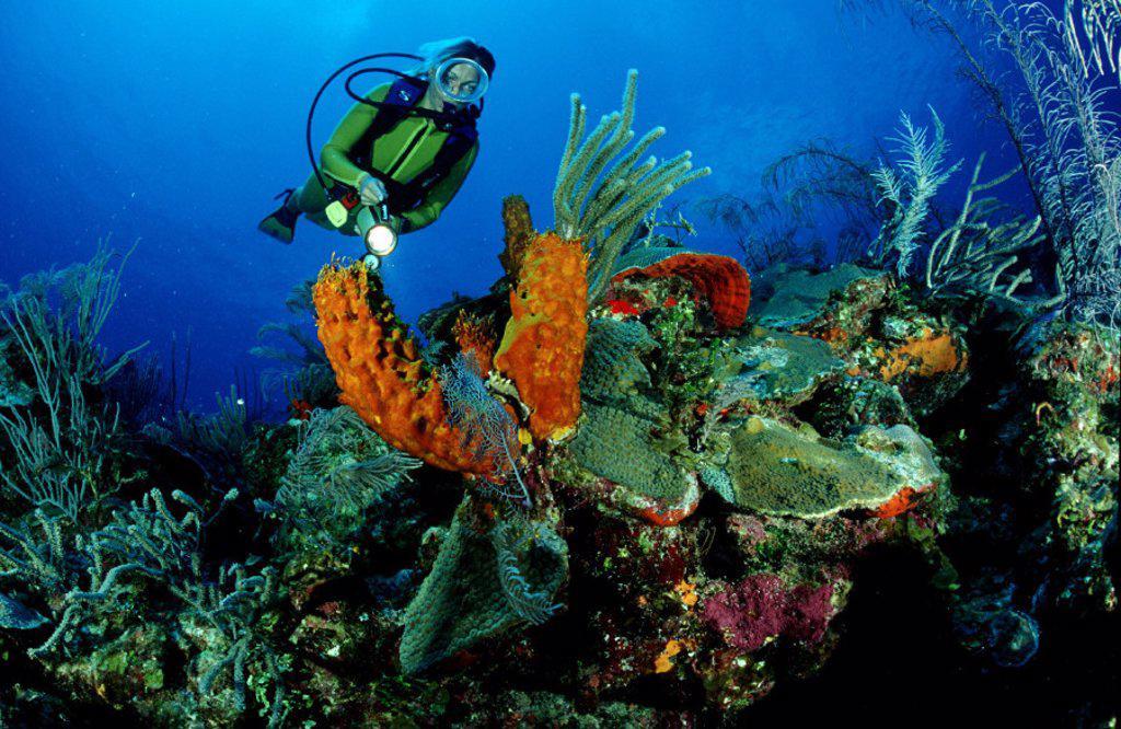 Stock Photo: 1597-20847 action, Bahamas, Caribbean, Caribbean Sea, Carribbean reef, coral, coral reef, corals, diving, Grand Bahamas, holida