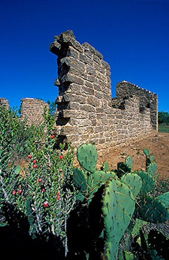 USA, America, North America, Texas, Albany, fort Griffin State Park and Historic site, ruins, cacti : Stock Photo