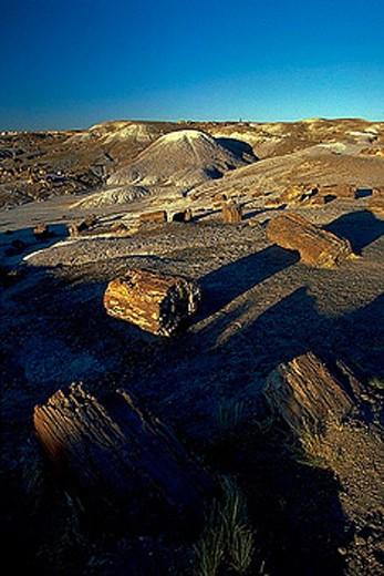 Stock Photo: 1597-25574 USA, America, North America, Arizona, Petrified Forest, national park, park, trees, fossilizes, fossilization
