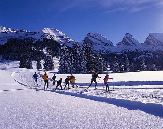 Stock Photo: 1597-27822 cross_country skiing, cross_country, skiing, group, snow, winter, winter sports, sports, Toggenburg, Sellamatt, Churfi