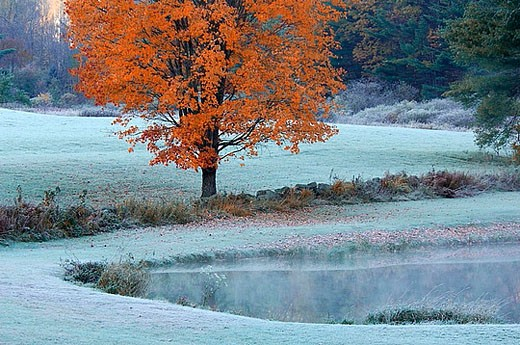 scenery, landscape, pond, pond, smoking, ground fog, hoarfrost, cold, cold, autumn, tree, field, meadow, autumn scener : Stock Photo