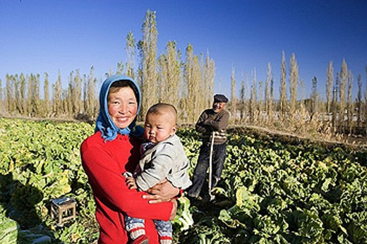 China, Asia, Silk Road, province Gansu, Dunhuang, farmers, cultivation, outhouse, harvest, crop, Chinese cabbage, vege : Stock Photo