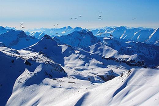 Switzerland, Europe, alpine chough, Pyrrhocorax graculus, mountains, birds, bird dream, Bernese Alps, view, Schilthorn : Stock Photo
