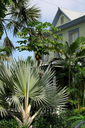 USA, America, United States, North America, Private House, Key West, Florida Keys, Florida, United States of America, : Stock Photo