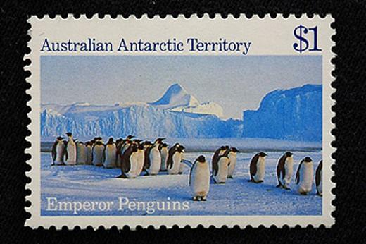 Emperor penguins, Australian Antarctic Territory, postage stamp, Australia, ocean, sea, Snow, ice, winter, cold, Illus : Stock Photo