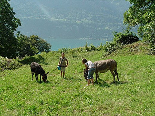 Two girls, donkeys, animals, encounter, chord, rope, meadow, child, children, mountains, Bernese Oberland, Switzerland : Stock Photo