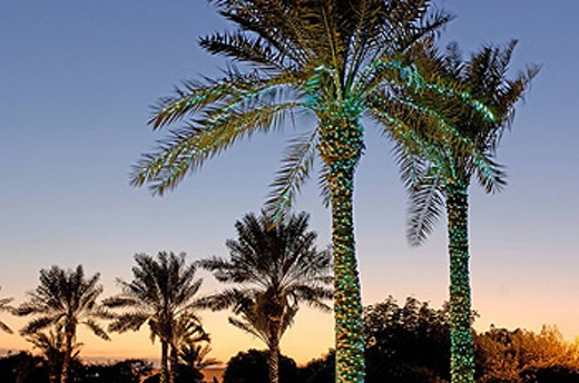 Stock Photo: 1597-36081 Ritz_Carlton Bahrain Hotel, Spa, Palm trees, Manama, Bahrain, Arabian Peninsula, at night, illuminated, illumination,