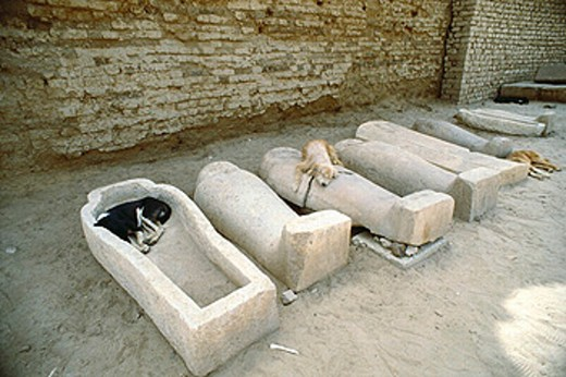 Egypt, North Africa, dogs, sarcophagi, sleeping, droll, humor, animals, beasts, amusing, animal, beast, : Stock Photo