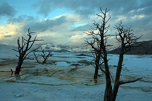 Stock Photo: 1597-39009 Mammoth Hot Springs, USA, America, United States, North America, Yellowstone, national park, Wyoming, landscape, water