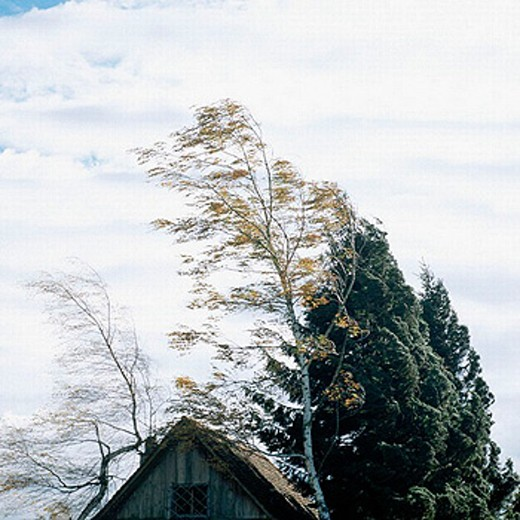 Stock Photo: 1597-4190  cutting, part, trees, birch, gable, house, home, storm, blowing, clouds, weather, storms, thunderstorms,