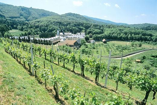 Slovenia, Pleterje Carthusian Monastery, Pleterje, landscape, vineyards, wine region, vineyard, monastery, Europe, hil : Stock Photo