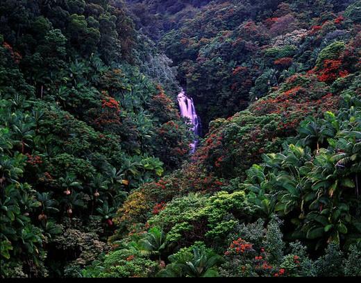 USA, America, United States, North America, Hawaii State, Umauma falls, Big Island, Hawaii Island, Hamakua Coast, Uma : Stock Photo