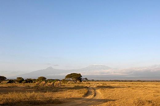 Africa, Kenya, Kimana area, Mount Kilimanjaro, scenery, landscape, landscape, mountain, mountains, savanna, dirt road, : Stock Photo