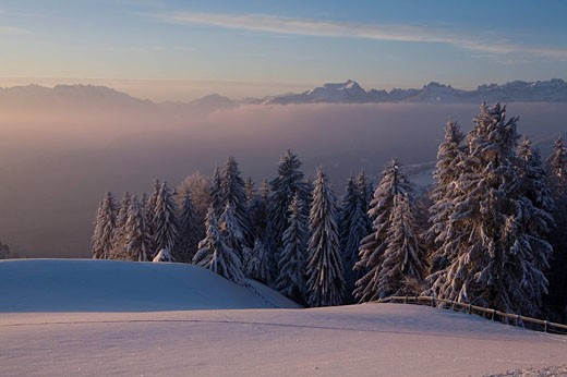 Switzerland, Europe, St. Anton, Appenzell, canton Appenzell, Innerrhoden, Trees, Dawn, Dusk, Twilight, Impressive, Moo : Stock Photo