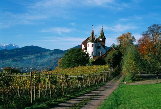 vineyard, Rhine Valley, autumn, way, castle, Wine stone, Vineyard, Wine, Switzerland, Europe, Eastern Switzerland, : Stock Photo