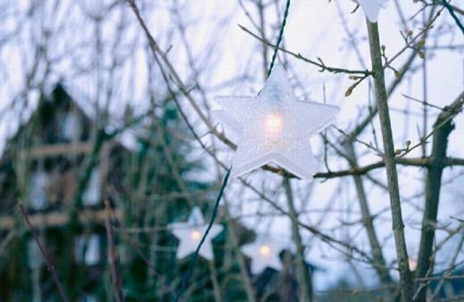 outside, decoration, adornment, house, home, lights, Switzerland, Europe, stars, shrub, bush, Christmas, : Stock Photo