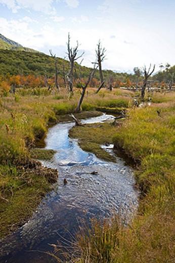 Stock Photo: 1597-59326 Argentina, Südamerika, Amerika, March 2009, Tierra del Fuego, Near Ushuaia city, Landscape, scenery, dead trees, nature, natural, water, swamp, bog, wetland, wetlands