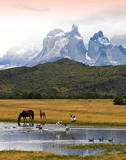 Stock Photo: 1597-59426 Chile, South America, March 2009, Chilean Patagonia, Torres del Paine National Park, landscape, scenery, nature, mountains, Cuernos del Paine, lake, water, grass, grassland, horse, mare, foal, birds