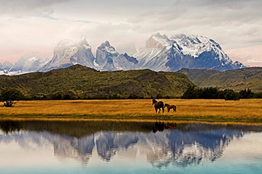 Chile, South America, March 2009, Chilean Patagonia, Torres del Paine National Park, landscape, scenery, nature, mountains, Cuernos del Paine, lake, water, grass, grassland, horse, mare, foal : Stock Photo