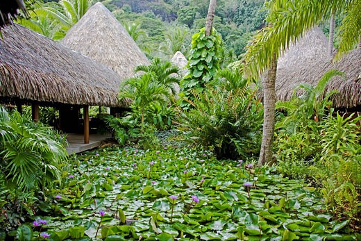 Stock Photo: 1597-60373 Tahiti, Society Islands, Bora Bora Island, Garden at Matira