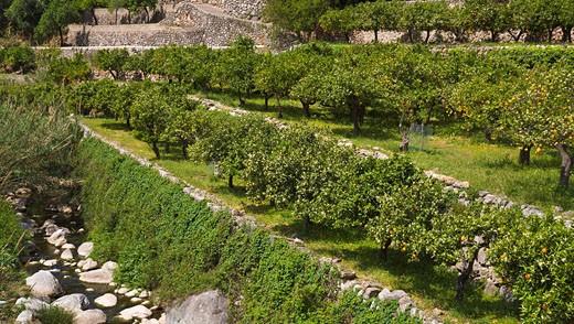 Orange Grove, Fornalutx, Mallorca, Spain : Stock Photo