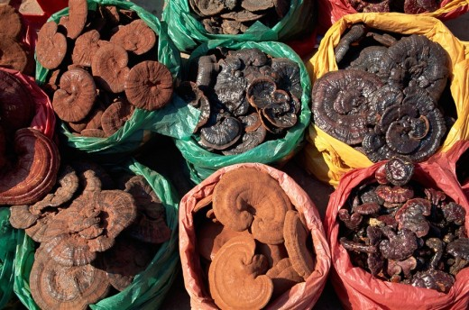 China, Asia, Hong Kong, Lingzhi mushrooms, Ling Zhi, Ganoderma lucidum, Asia, Sheung Wan, Herbal Medicine Shop, Herbal : Stock Photo