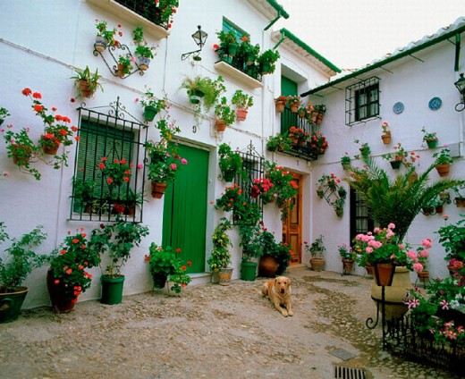 Stock Photo: 1597-6383  Andalusia, floral decoration, Cordoba, houses, homes, dog, Priego, Spain, Europe, typical,