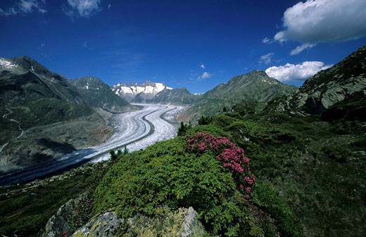 Switzerland, Europe, Aletsch glacier, Canton Valais, Aletsch area, Alpine roses, moraines, ice, clouds, mountains, mou : Stock Photo