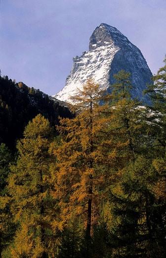 Switzerland, Europe, Canton Valais, Matter valley, Matterhorn, larch, fall, autumn, mountains, mountain, alps, alpine, : Stock Photo