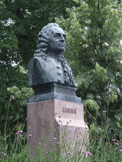 Stock Photo: 1597-66688 Carl Linnaeus, Statue, Linne, Linneus, Vaxjo, Sweden, Europe, scientist, bust