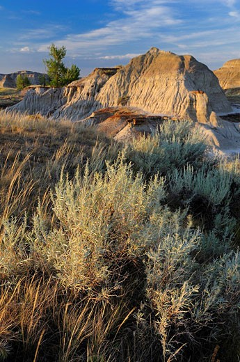 Canada, Badlands, at Dinosaur Provincial : Stock Photo
