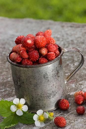 Food, berries, strawberries, fruits, wild strawberries, vessel, blossom, flourish, freshly, food, groceries, : Stock Photo