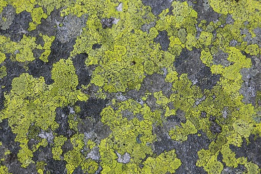 To nightmares, Alps, mountain, mountains, detail, cliff, lichen, lichens, mountains, macro, pattern, sample, close_up, stone, in the abstract, alpine, colorfully, yellow, yellow lichens, graphically, graphic pattern, sample, gray : Stock Photo