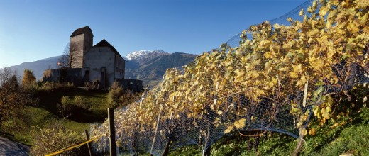 Stock Photo: 1597-77950 Switzerland, scenery, Sargans, wine cultivation, vineyards, shoots, autumn, castle, castle, grapes, clusters, wine, mountains, panorama, net
