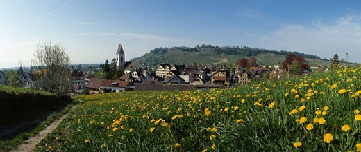 Switzerland, scenery, Thal, place, flower meadow, meadow, dandelion, canton St. Gallen, panorama, spring : Stock Photo