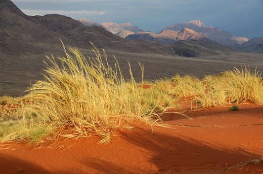 Sand Dunes, Dunes Lodge, Wolwedans Lodge, Namib Rand Nature Reserve, Hardap Region, Namibia, Africa, Travel, Nature : Stock Photo