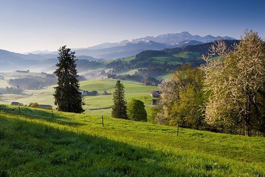 Säntisblick, Switzerland, canton Appenzell Ausserrhoden, vantage point, mountains, Alpstein, Sänits, trees, blossoming, cherry tree, wood, forest, spring, houses, homes, meadows, fields : Stock Photo