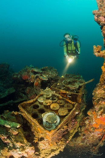 Stock Photo: 1597-83252 Taucher findet scharfe Munition aus dem 2. Weltkrieg auf Japanischen Kriegschiff Helmet Wrack, Mikronesien, Palau, Diver discover armed Munition from II World War at Japanese Warship Helmet Wreck, Micronesia, Palau