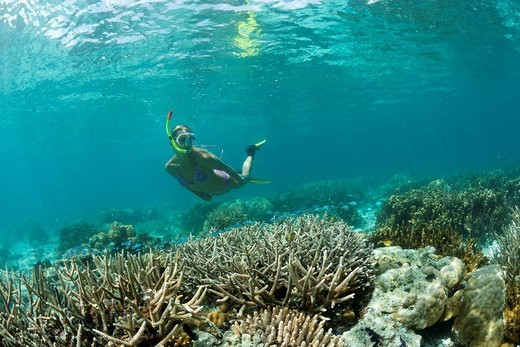 Korallenriff und Schnorchlerin, Mikronesien, Palau, Snorkeling at shallow Coral Reef, Micronesia, Palau : Stock Photo