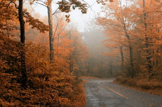 Road and fog, Fall, colours, colors, Promised Land State Park, Pennsylvania, USA : Stock Photo