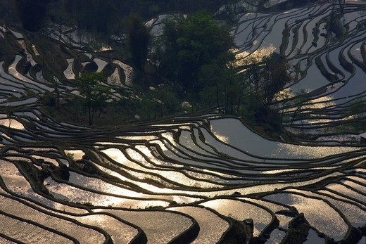 Stock Photo: 1597-93214 Yuanyang, China, Asia, rice terraces, growing of rice, rice fields, agriculture, water, trees, spring, reflection
