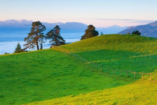 Saint Anton, Switzerland, Europe, canton Appenzell, Innerrhoden, view point, meadow, trees, sunrise, morning light : Stock Photo