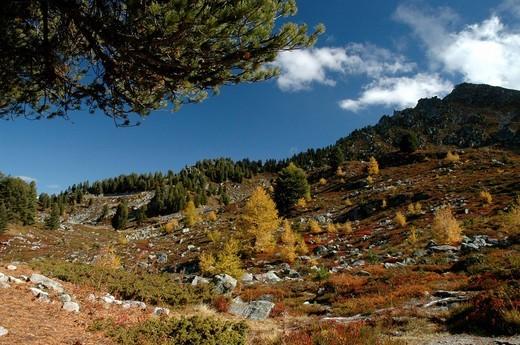 Autumn, landscape, Dent de Nendaz, Valais, Switzerland, mountains, trees : Stock Photo