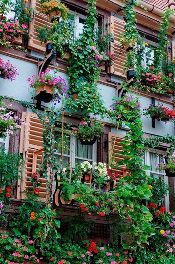 Stock Photo: 1597-94422 Blumengeschmücktes Haus in Colmar