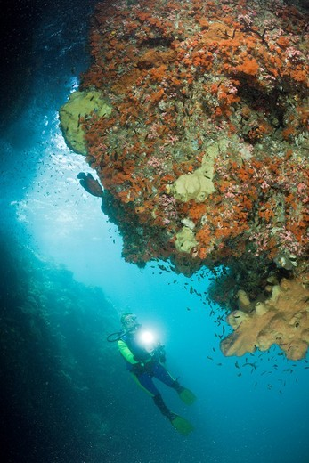Stock Photo: 1597-95129 Scuba Diver watching Corals in Grotto, Raja Ampat, West Papua, Indonesia