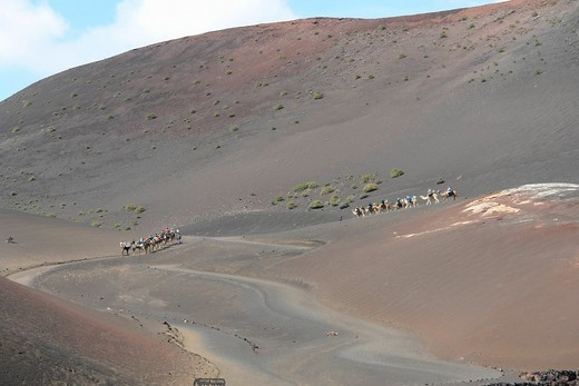 Spain, Lanzarote, Timanfaya, Parque national, wandering, migration, tourist, mountains, camels, scenery, person, spectacle of nature, persons, place of interest, tourism, volcanoes, ways, animals, beasts, : Stock Photo