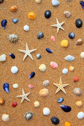 4, 5, arm, biodiversity, detail, Great Britain, coast, macro, mass, sea, sea animal, amount, crowd, mussel, mussels, patterns, samples, close_up, nature, North Sea, sand, sand beach, shellfish, Scotland, starfish, summer, star, beach, seashore, structure, : Stock Photo