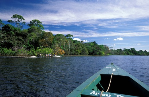 Stock Photo: 1597-97313 Boat tour, Rio Negro, near Manaus, Amazonia, Brazil, South America, river, tropical forest