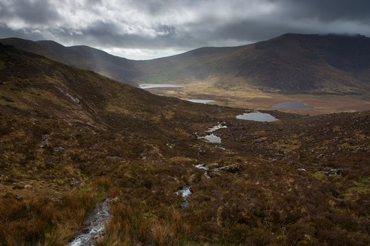 on the top of the connor pass, close to the village of dingle, county kerry, death grass in the highmoor : Stock Photo