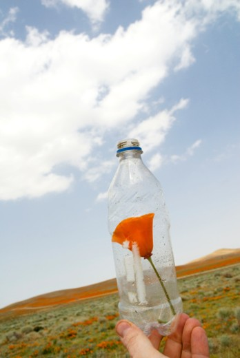 Stock Photo: 1598R-10010293 USA, California, Antelope Valley, California Poppy Reserve, person holding poppy in plastic bottle, close up of bottle